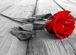comiat a rosa vidal puiggros